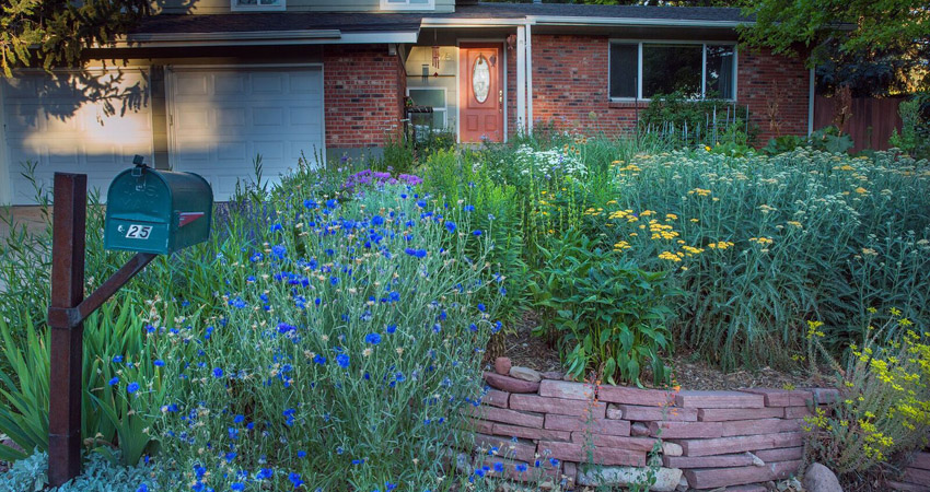 Westminster considering updates to landscape regulations to conserve water